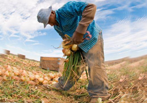 La agricultura aporta a la economía colombiana