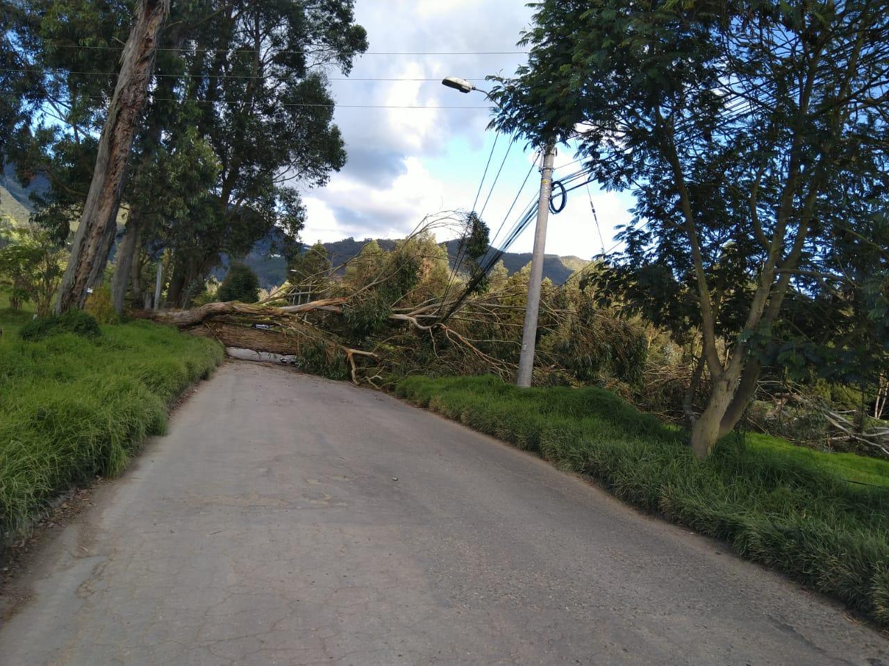Árbol caído en la vía a Guaymaral