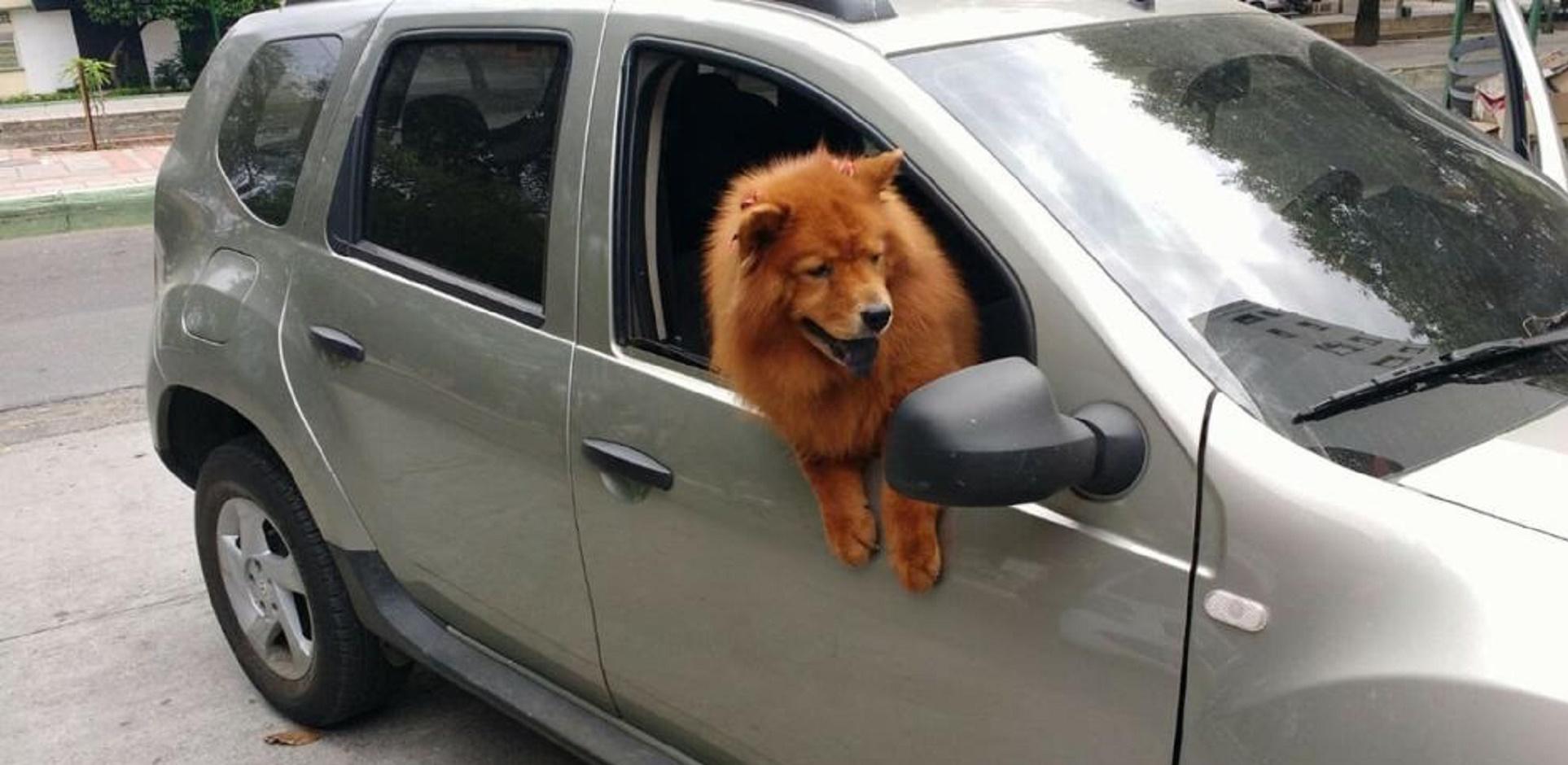La mascota siempre viajaba como copiloto.