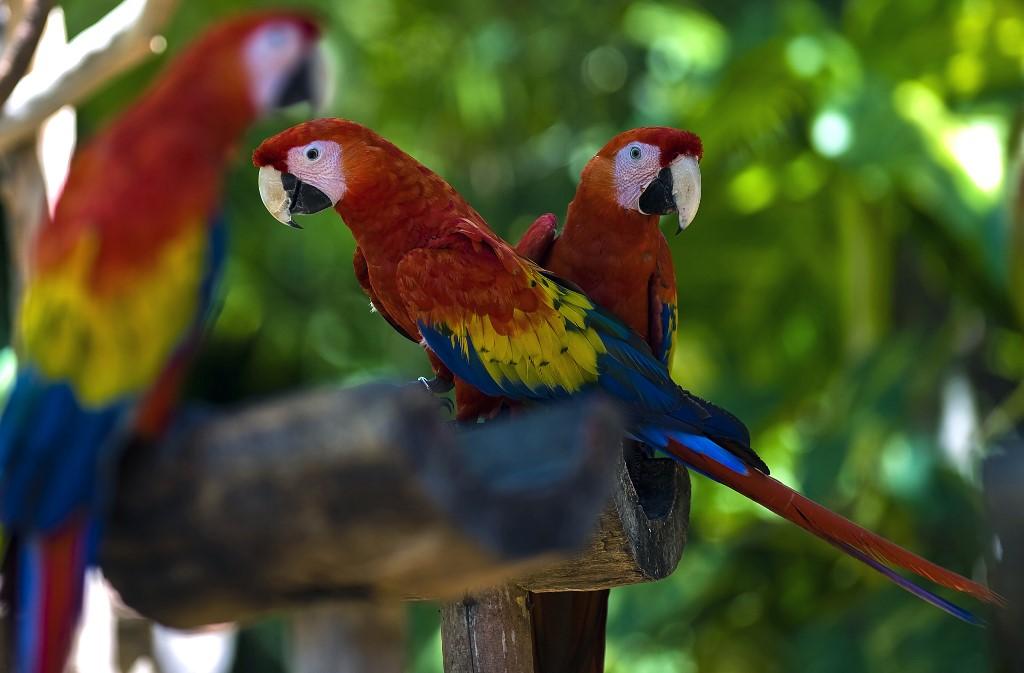 Aves en Xcaret Park, México