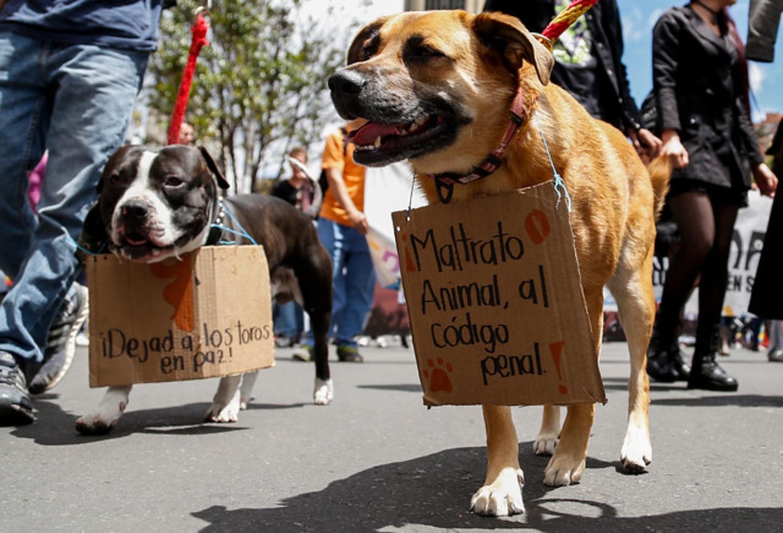 Maltrato animal: crueldad, protección, leyes…