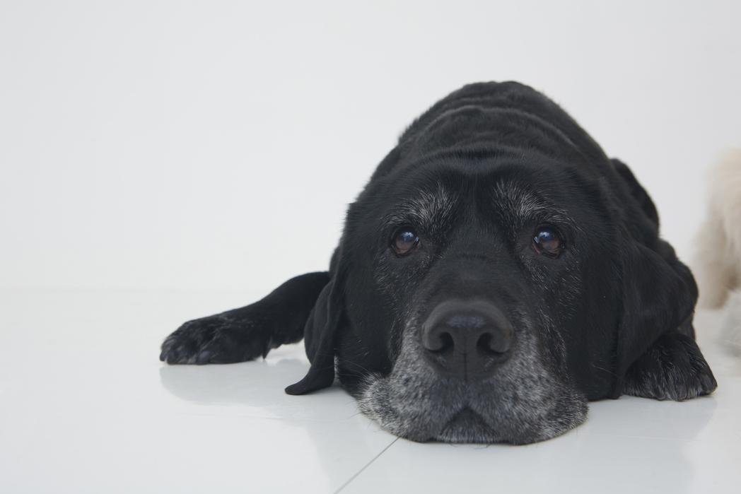 El contacto físico con los animales de compañía incide en la producción de endorfinas.