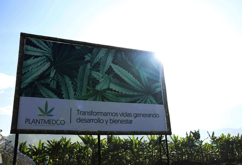 Empresa de cannabis medicinal en el Eje Cafetero