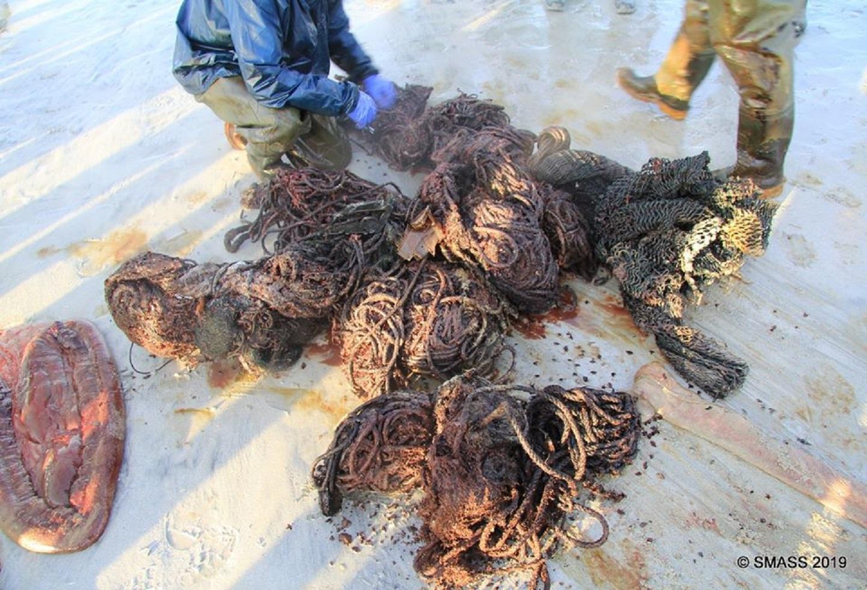 Residuos encontrados en el estómago de una ballena en Escocia