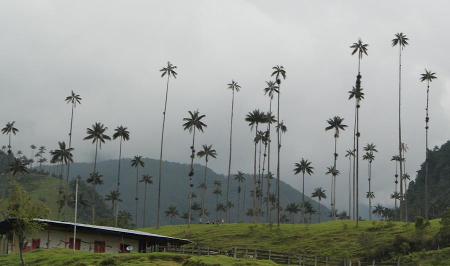 Valle de Cocora en Salento, Quindío