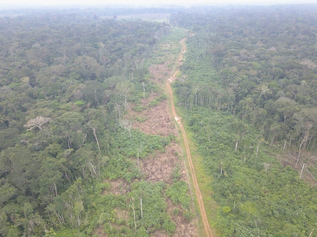 Deforestación Amazonas