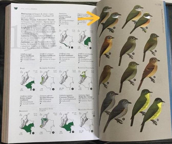 Registro de aves.