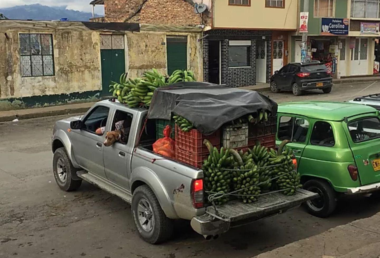 A pesar de que el plátano es una pieza fundamental para la seguridad alimentaria de las familias de los productores en Pacho, algunos optan por comercializarlo en la Plaza de Mercado del municipio.