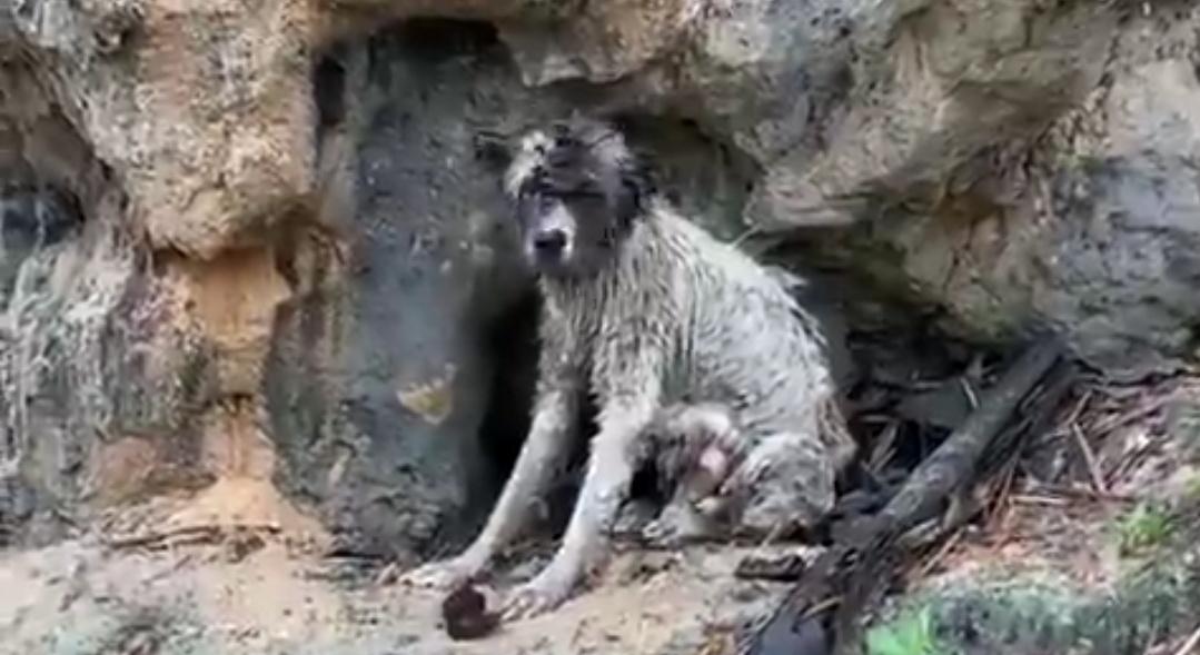Perra en avalancha