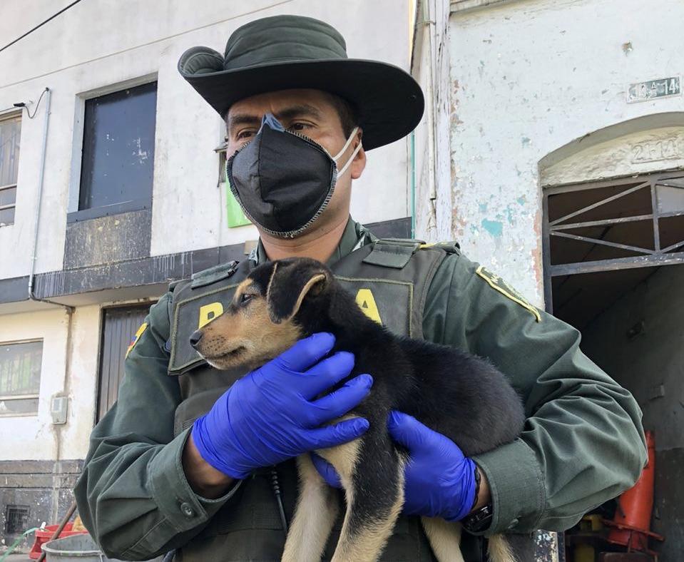 Autoridades adelantan actividad de protección a animales de calle en diferentes sectores de la ciudad.