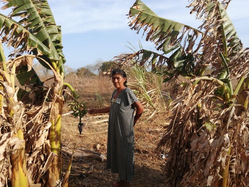 Cultivos secos en rancherías por falta de agua