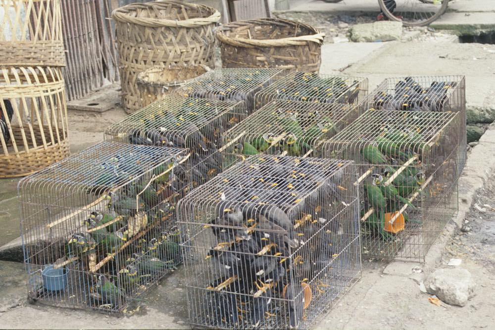 Tráfico de animales silvestres.