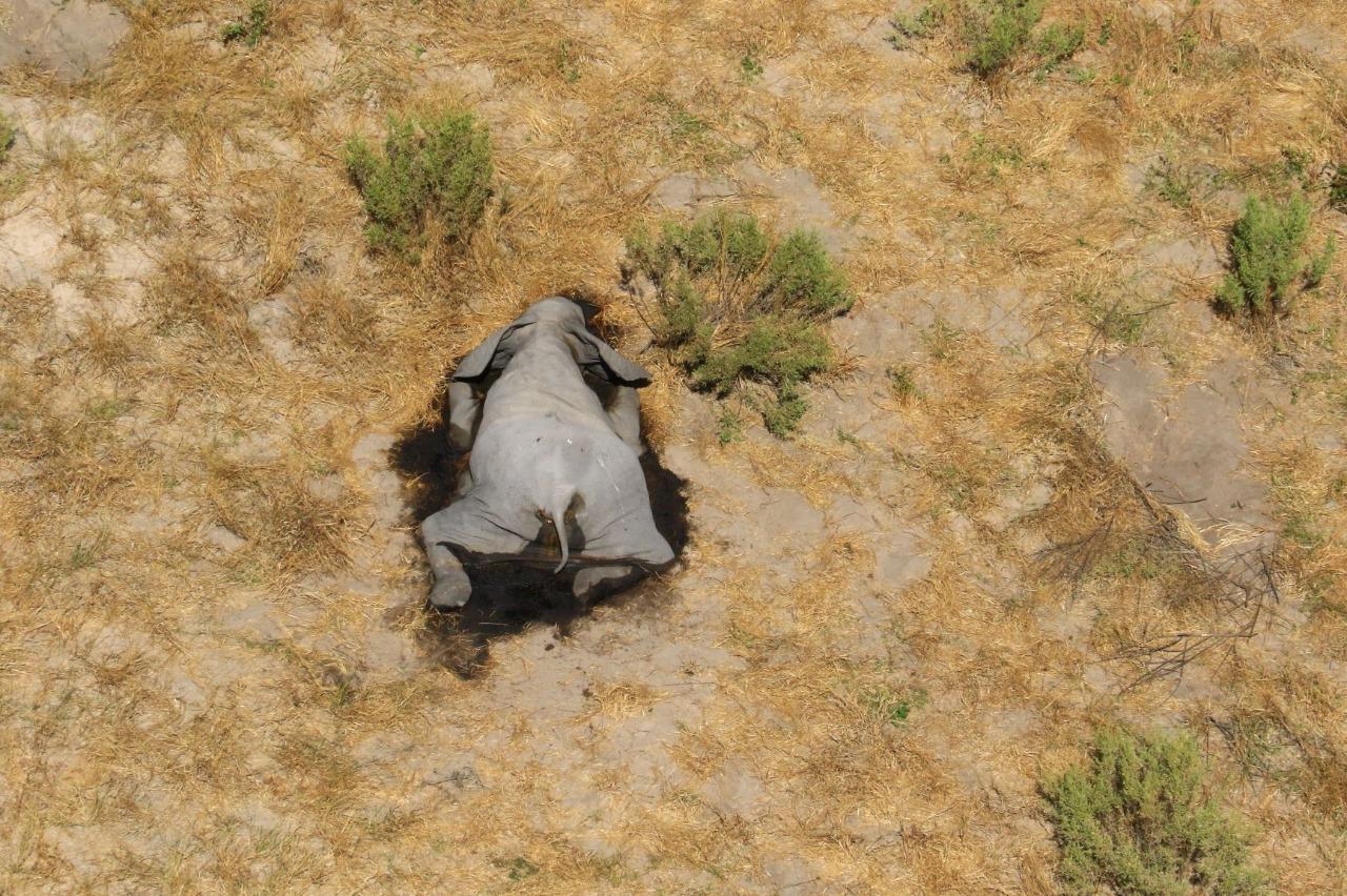 Muerte de elefantes en Botswana