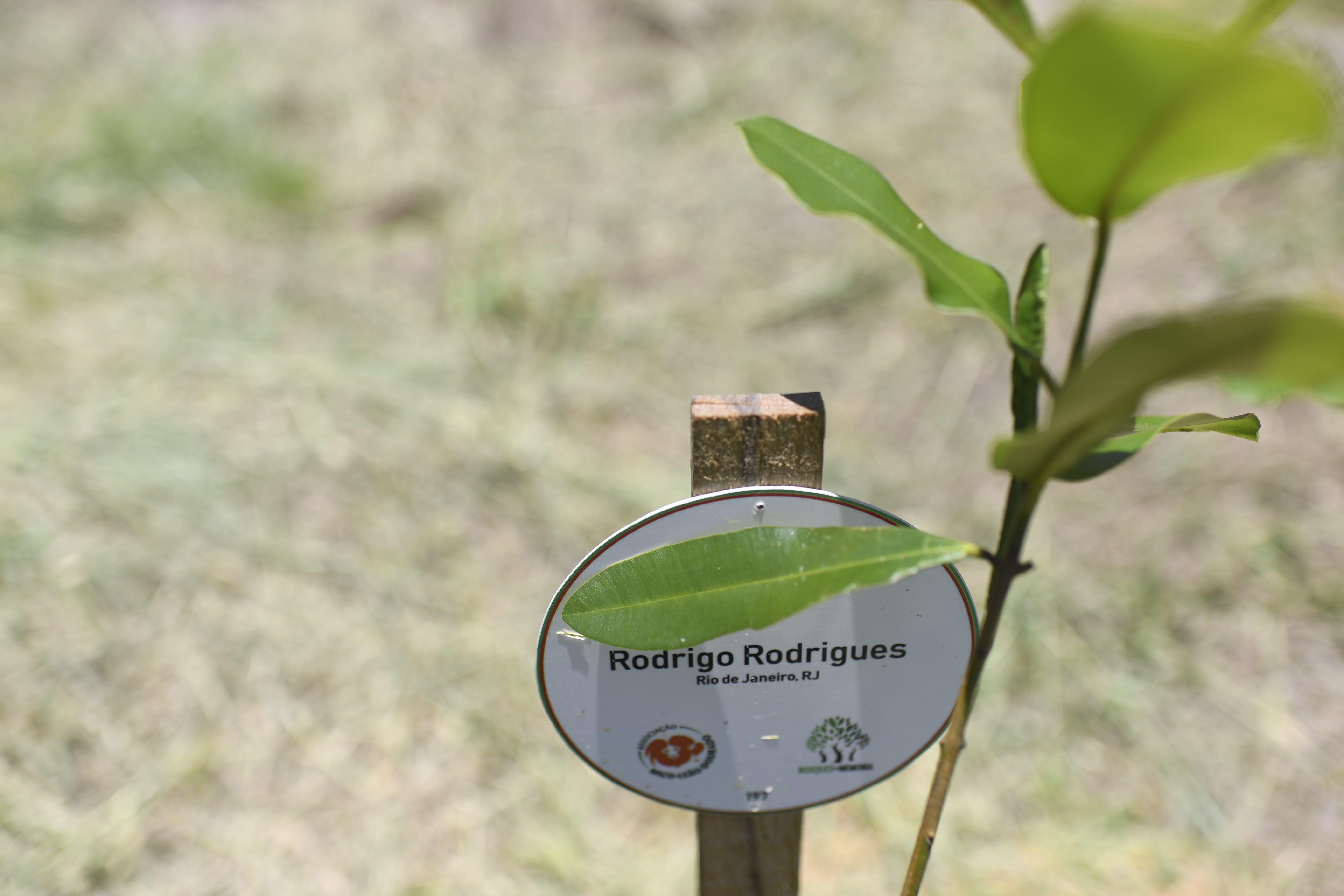 Siembra de árboles en Brasil por cada persona fallecida a causa de covid-19.