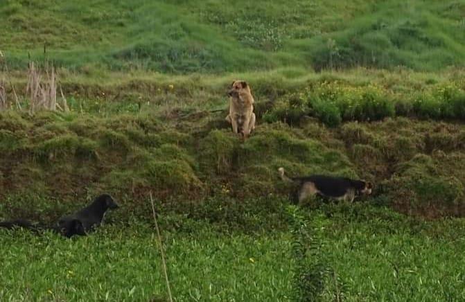 perros ferales
