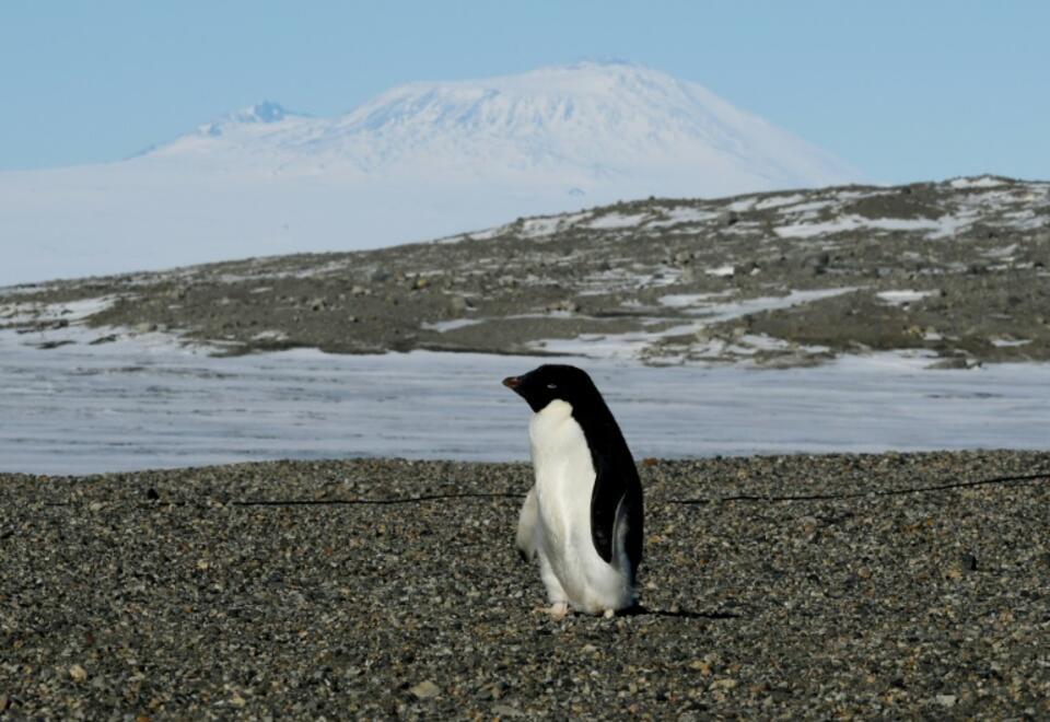 Un pingüino en el Estrecho de McMurdo en la Antártida.