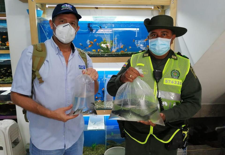 Los propietarios del local de peces, no contaban con los documentos requeridos por la autoridad ambiental.