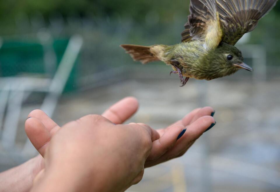 Colombia es el país con mayor cantidad de especies de aves en el mundo. Foto: Felipe Villegas (Instituto Humboldt).