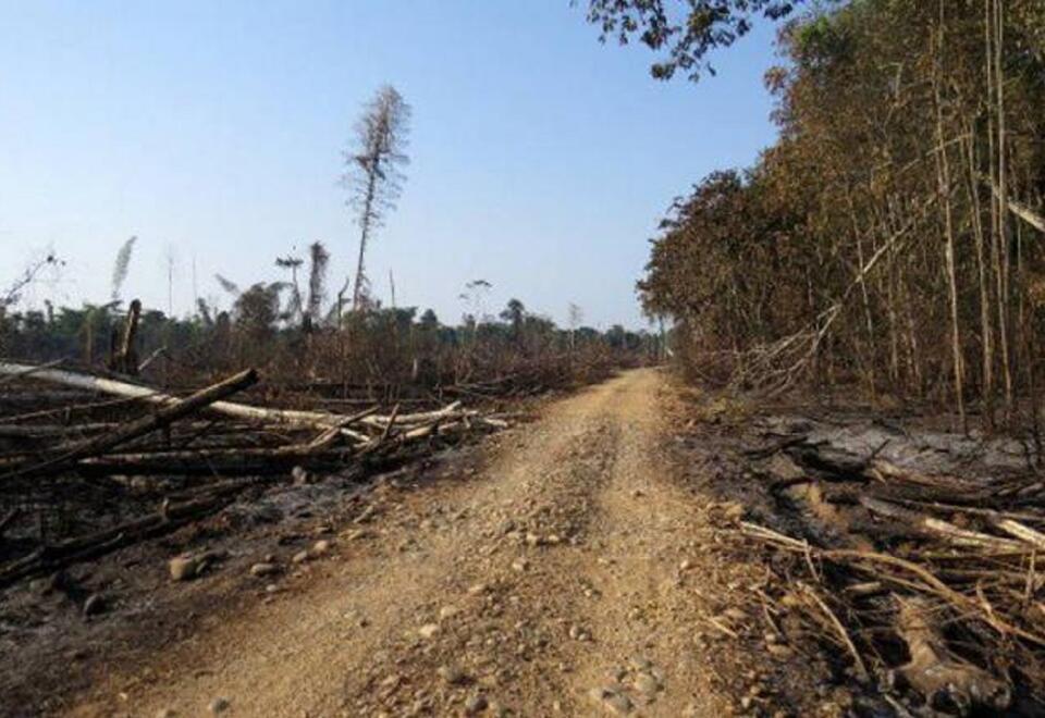 Deforestación - referencial