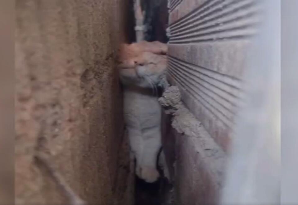 Así fue el rescate de un gato en Medellín luego de quedar atrapado entre dos muros en una vivienda