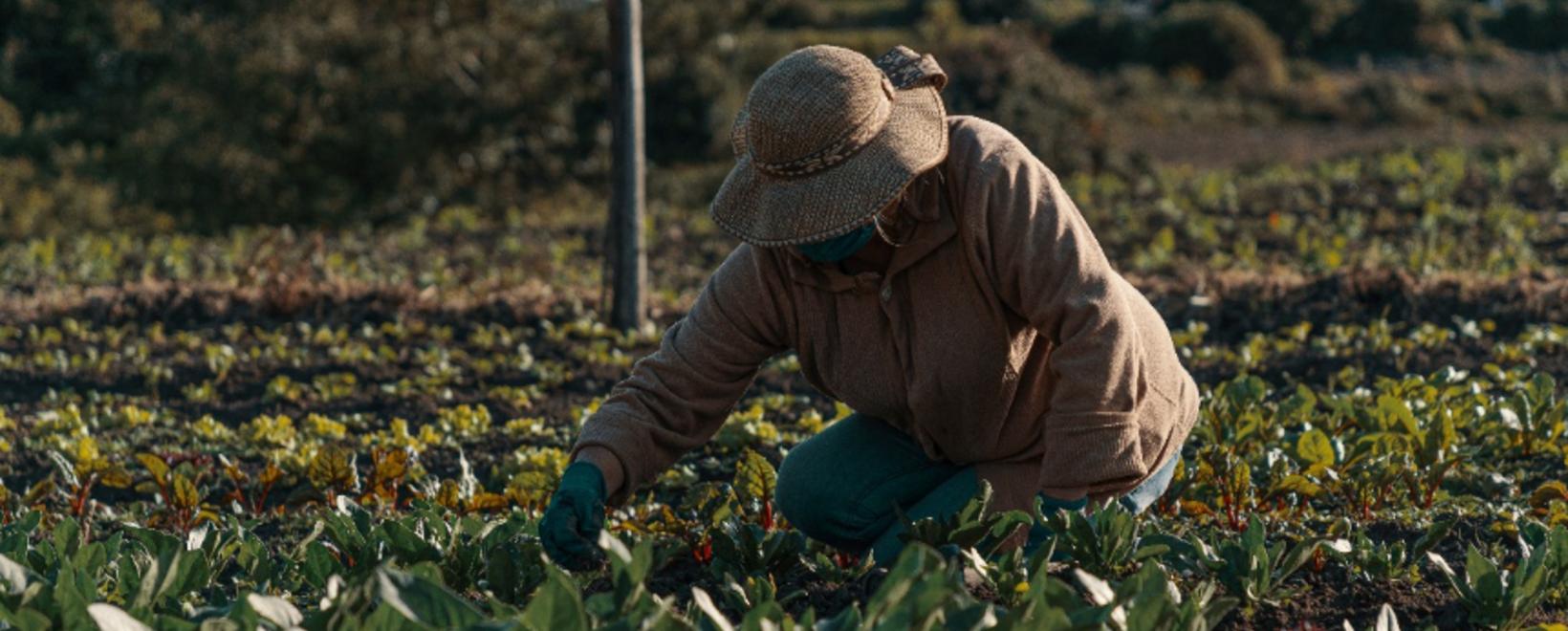 Campesinos Cultivos Alimentos