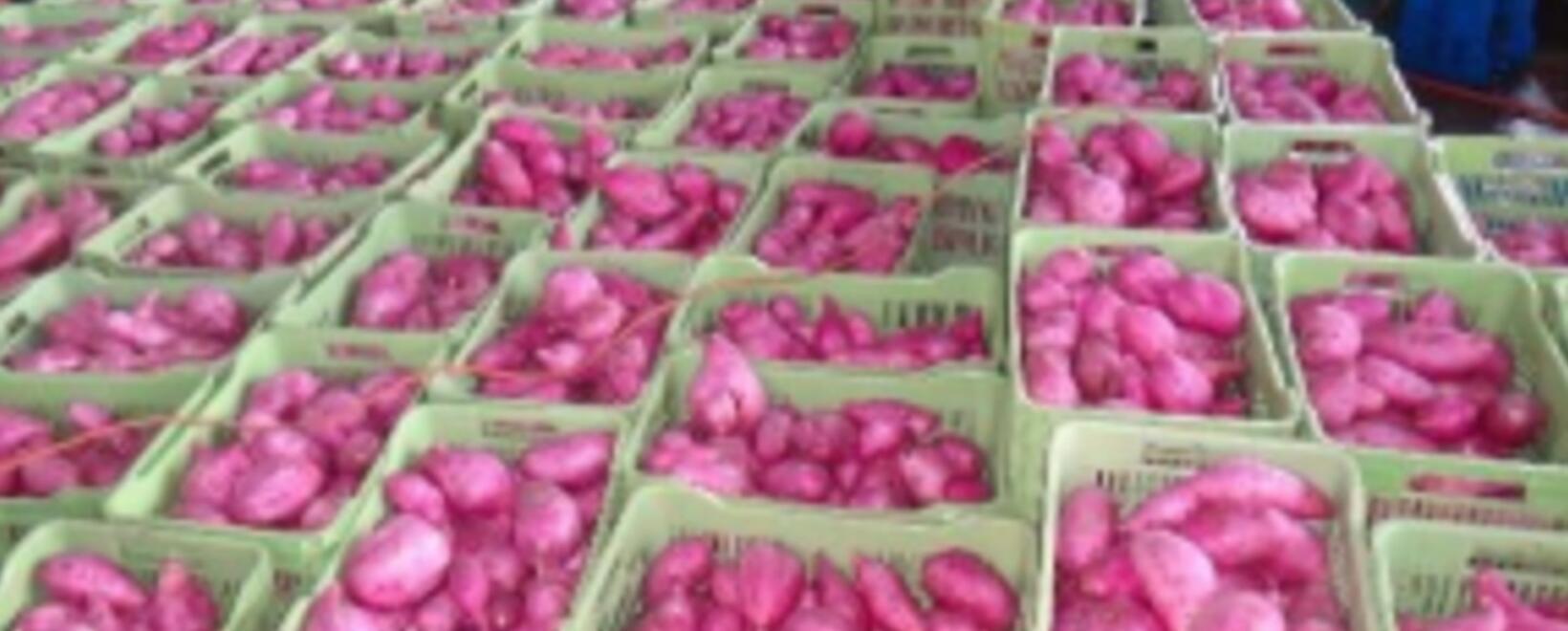 Este boletín es una guía rápida para el cultivo de frijol, que por su baja rentabilidad e inversión merece ser tratado con ciertos detalles.
