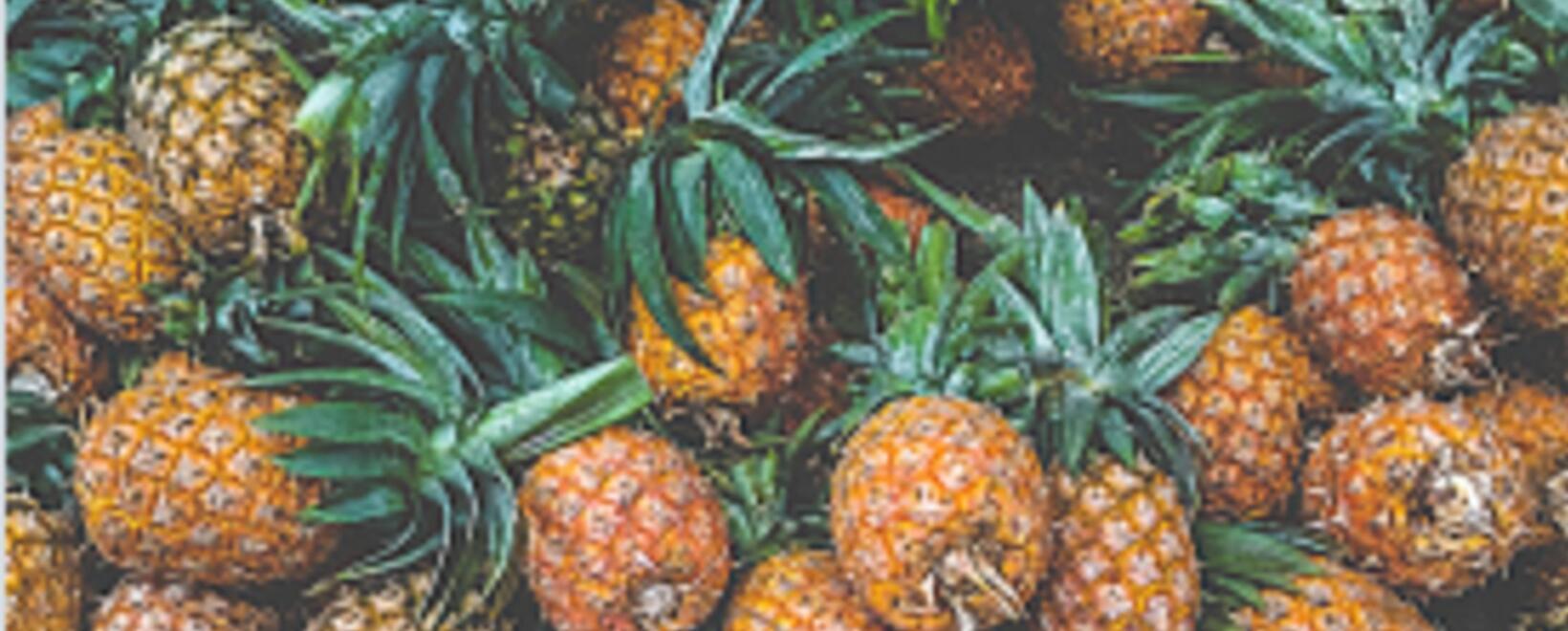 Tenga en cuenta estas buenas prácticas para combatir las enfermedades en los cultivos de piña.