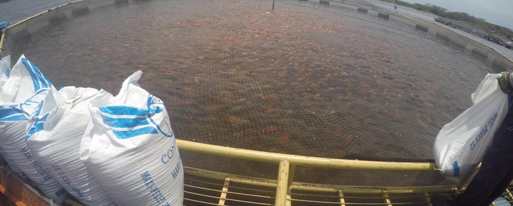 Crecimiento de la acuicultura