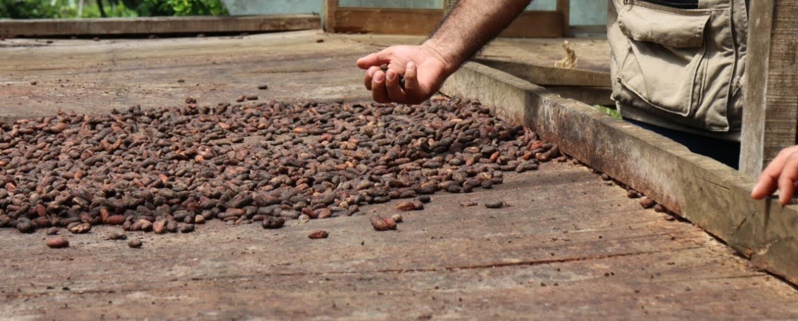 Tecnología y cacao
