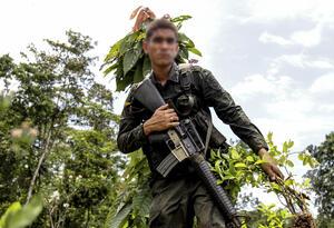 La Policía continua su lucha contra el narcotráfico, liderando la erradicación de cultivos de coca.