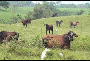 Las autoridades encontraron estas sustancias en el ganado.