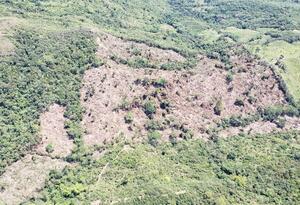 Autoridades buscan los responsables de este crimen ambiental.