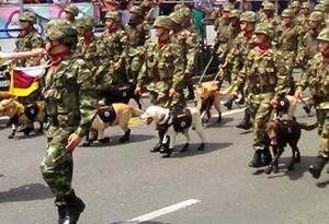 Son más de 30 militares de comandos entrenados, que tendrán como misión desarticular las bandas del narcotráfico y sicariato.