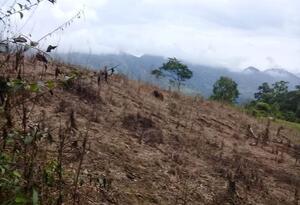Terrenos fumigados con glifosato en Antioquia