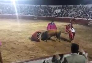 Caballo muere tras ser atacado por un toro en Aguazul, Casanare