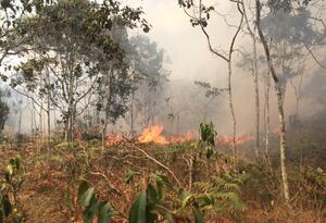Alerta por incendios forestales