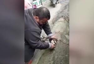 Hombre salva a cachorro