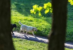 Perros paseando en un parque