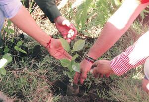 Referencia sembratón de árboles.