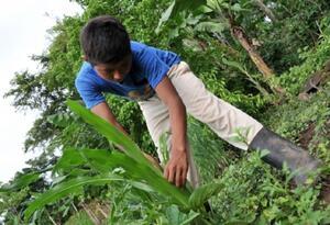 Más de 150 millones de niños son víctimas de trabajo infantil