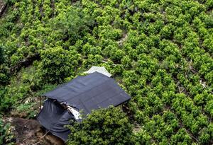 La erradicación de cultivos ilícitos en Nariño es un punto de discordia con le Gobierno Nacional