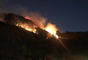 Más de siete mil hectáreas afectadas por incendio forestales