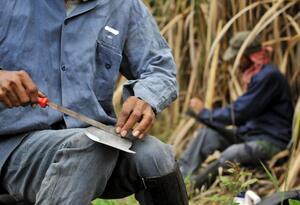 Trabajadores en ingenios azucareros en el Valle del Cauca.