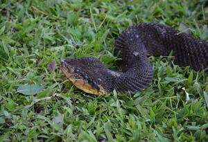 Según los registros, la especie nunca había sido vista en esta región de Colombia