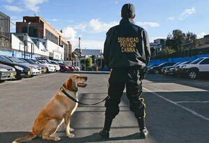 Perros Seguridad