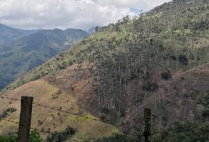 Palmas de cera en el cañón del río Toche, en Tolima.