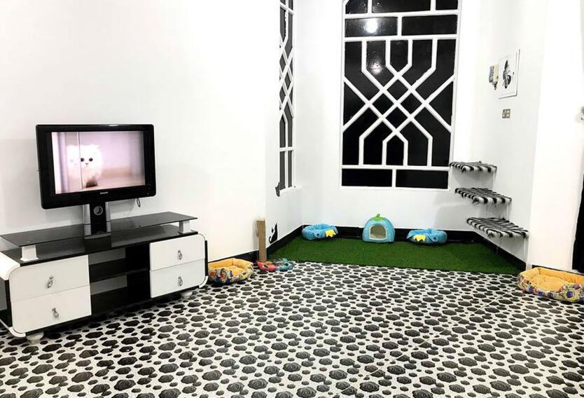 Hotel para gatos en Irak
