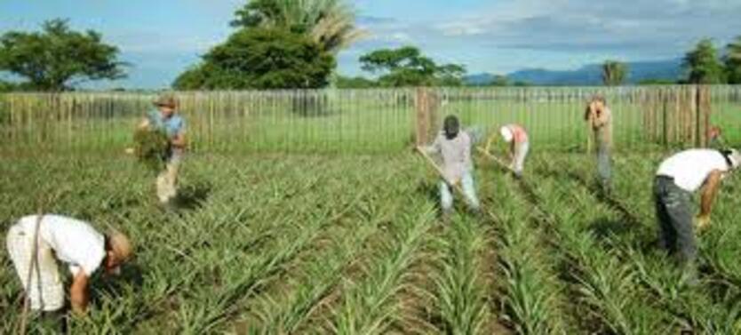 Campesinos a Ingenieros Agronomos