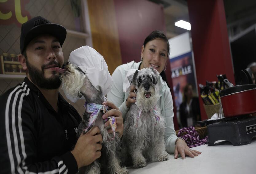 Radican proyecto de ley para permitir entrada de mascotas a restaurantes.
