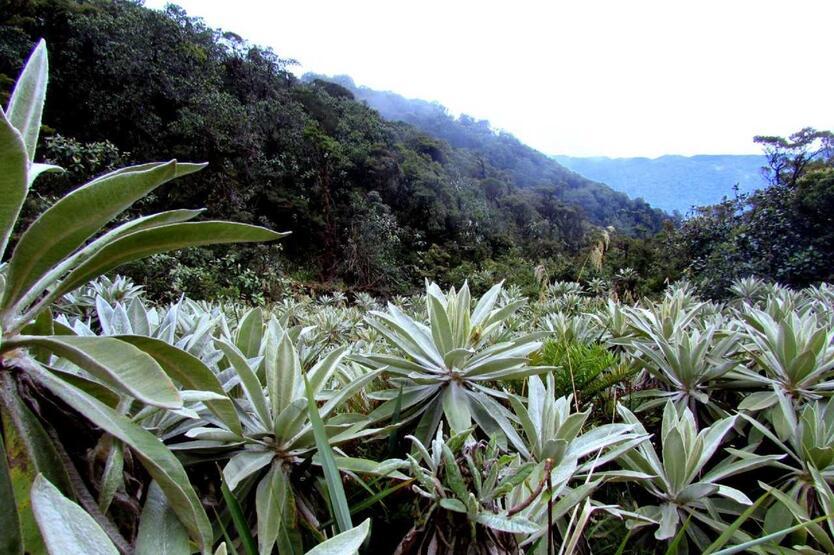 Dos nuevas áreas protegidas obtuvo el Huila durante el 2018.